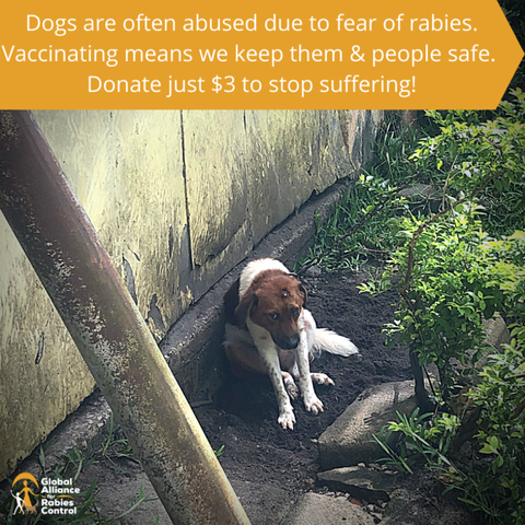 #3ToBeFree from rabies in Zanzibar. Help GARC, a trusted charity, raise money to vaccinate more dogs and prevent them being abused and mistreated.