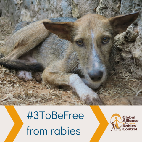 #3ToBeFree from rabies in Zanzibar. Help GARC, a trusted charity, raise money to vaccinate more dogs.