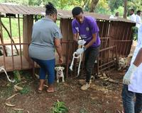 Beyond Students for Change vaccinates dogs against rabies in Ethiopia.