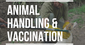 Animal Handling and Vaccination Certificate (AVC)