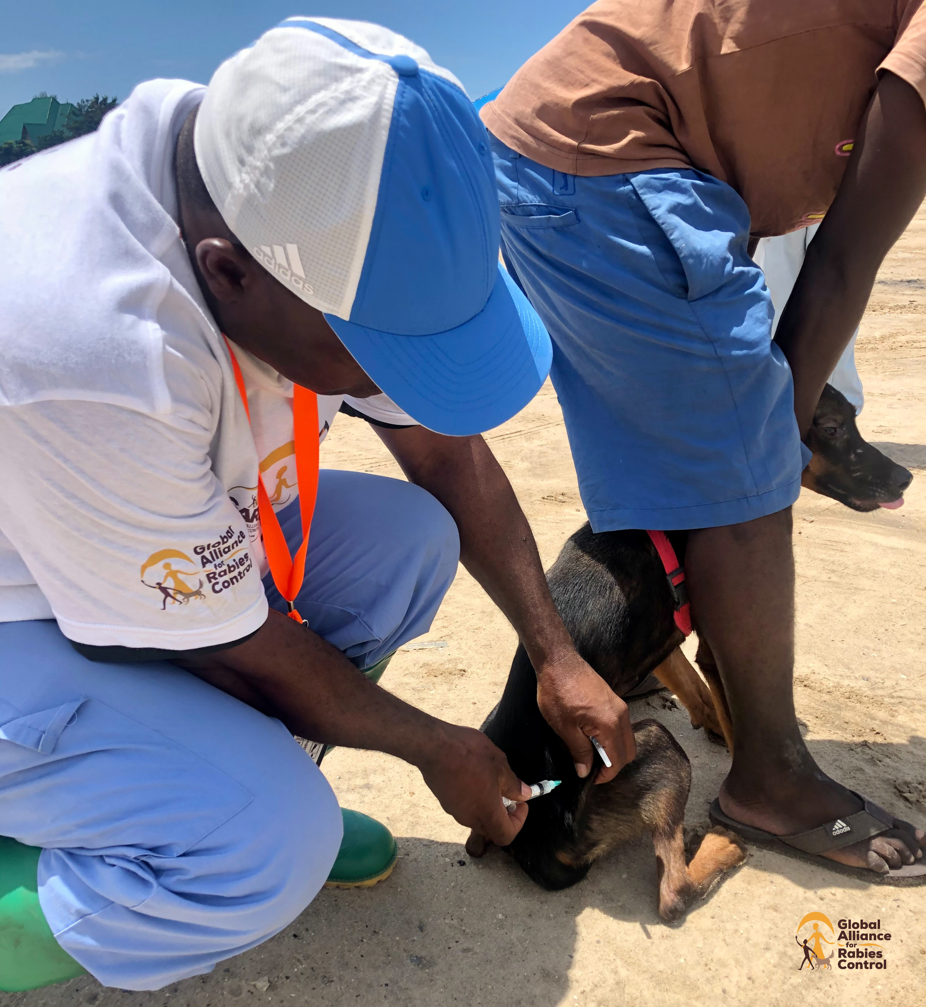 GARC supports Zanzibar government teams to vaccinate dogs against rabies.