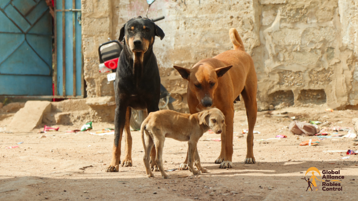 Two dogs and a sad puppy in an Urban area with litter.